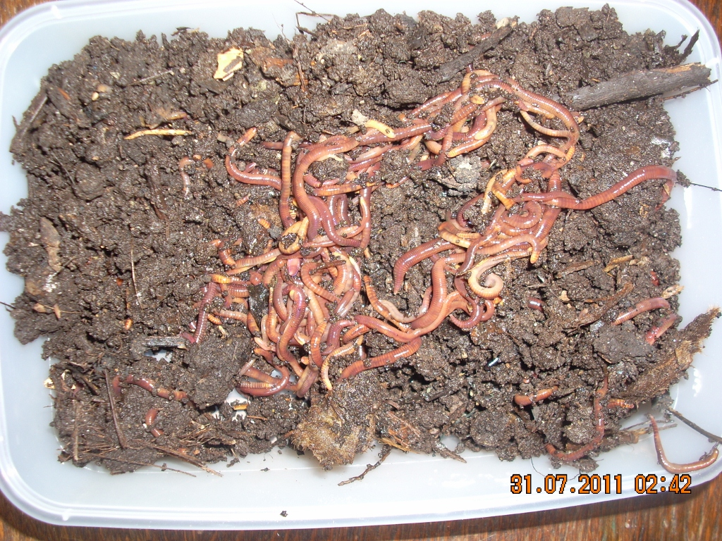Worms for sale 250g